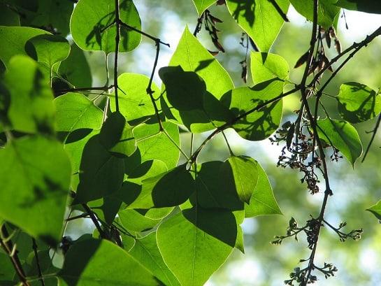 Les plantes médicinales : retour aux sources ?