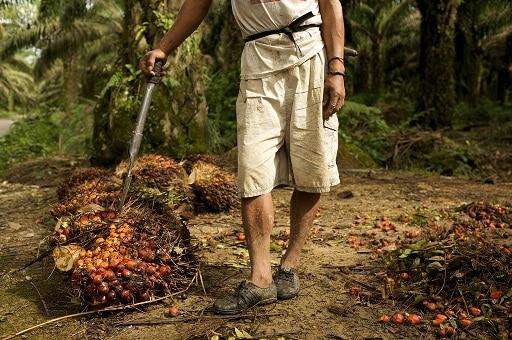Dangers de l'huile de palme