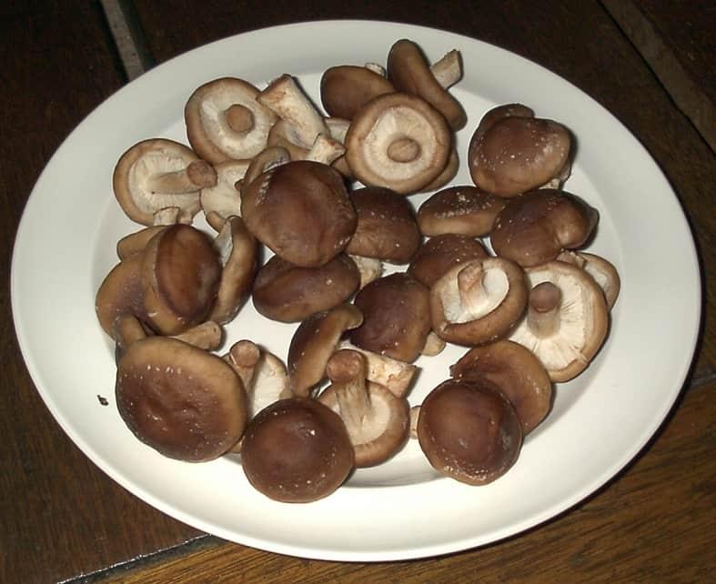 Le Shiitaké, un champignon aux nombreuses vertus