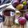 Les prunes, un plein de santé